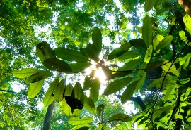 Will farmers in the tropical world be among the foresters of the 21st century through agroforestry systems?