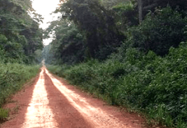 Study on the impact that roads have on tropical forest concessions