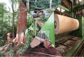 Focus on the private sector of the forest and timber sector in Cameroon: State of play of actors