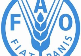 Boosting partnership between FAO and the private sector
