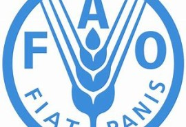 FAO – Global Forest Resources Assessment 2020 – FRA 2020