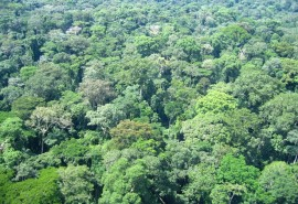 Legality and traceability of timber from community forests in Gabon – Ogooue Ivindo Province