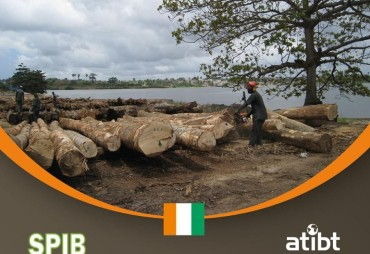 Timber sector in Ivory Coast : Study on the situation of the stakeholders