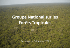 Report of the February 16, 2021 meeting of the National Group on Tropical Forests (GNFT)