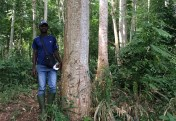 ATIBT technical data sheet : quality of plantation species for timber use