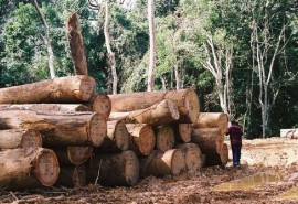 UFIGA publishes a study of sustainable forest management certification systems available in Gabon (FSC and PAFC Gabon)