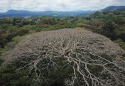 Central African forests vulnerable to global change