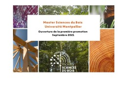 New Master in Wood Sciences at the Faculty of Sciences of the University of Montpellier, with a focus on tropical wood