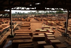 Tropical timber market - What future for the Congo Basin ?