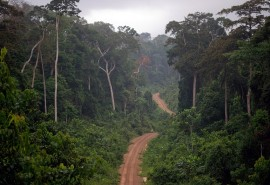 Synthetic presentation of the main data of the forest-wood sector in Central Africa