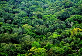 Gabon affirms its commitment to protect its forest cover
