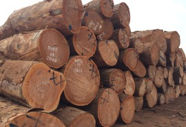CEMAC is moving towards an export ban on logs