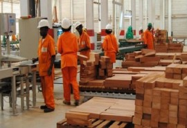 President Ali Bongo plans to create 50,000 jobs in 5 years through wood processing!
