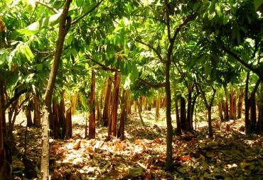 Planting - Agroforestry