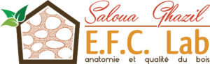 logo_efc_lab_horizontal