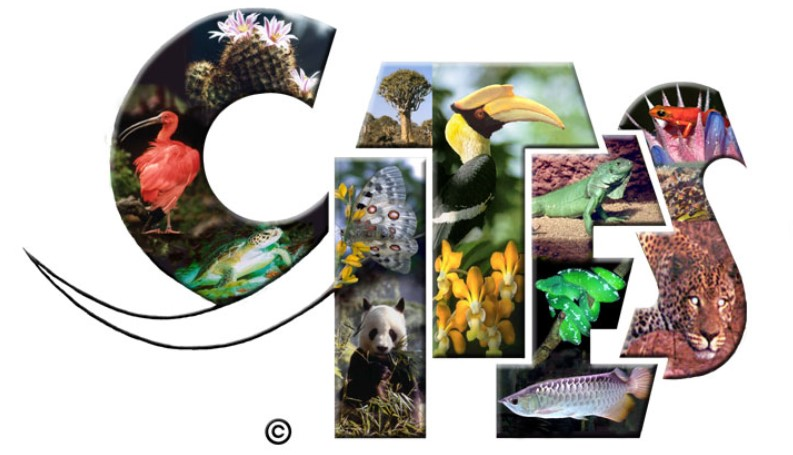 Image result for CITES